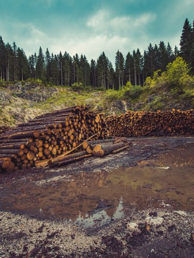 Cutting down the Rainforest, a Step Taking Us towards Danger