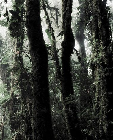 Facts About Rainforests You Probably Did Not Know