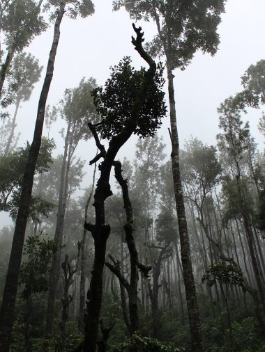 Rainforest and Its Preservance