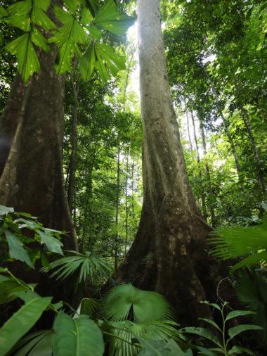 saving rainforest